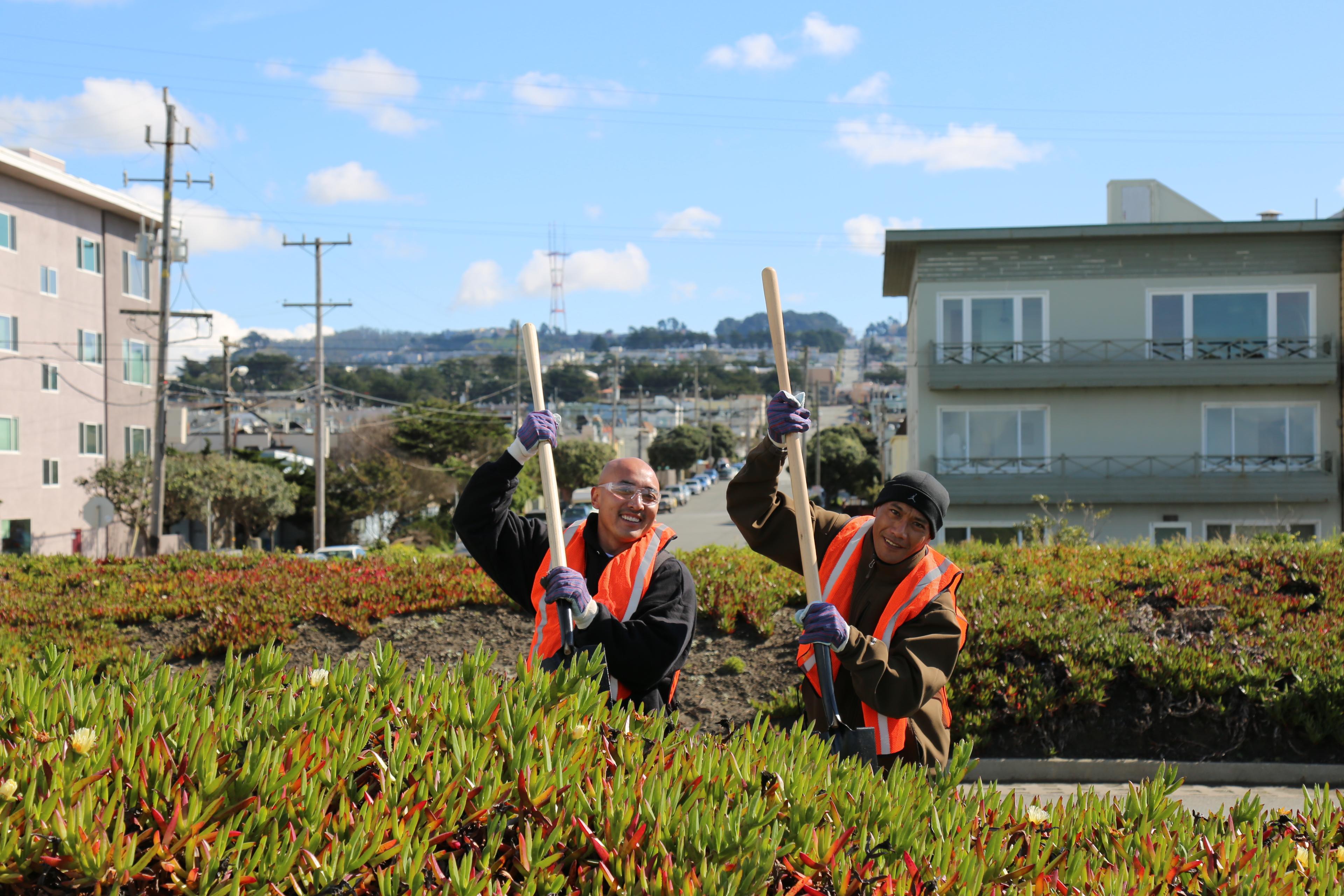 Volunteers landscaping along the Great Highway
